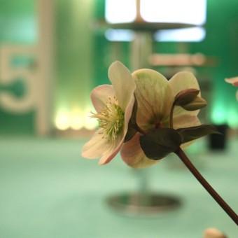 DATEV-Stand auf der Cebit 2013